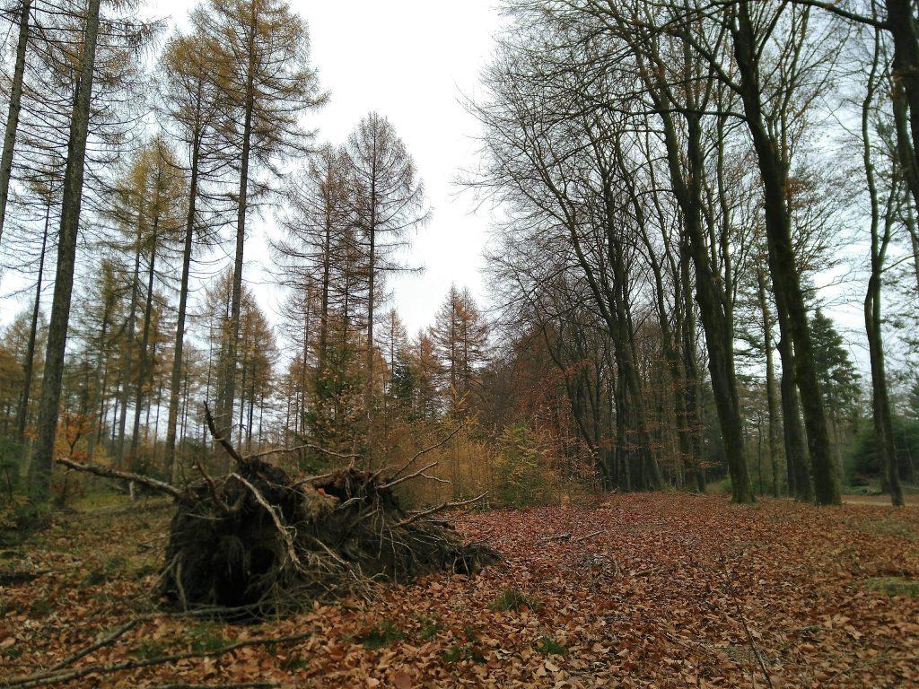 Bomen in bos De Sysselt met een grote boomstam op de grond