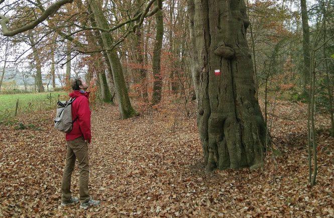 Man kijkt naar grote boom