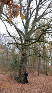Vrouw knuffelt met een boom