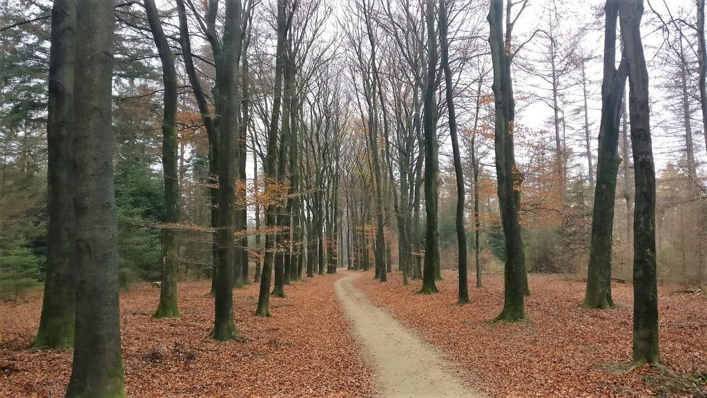 Pad door bos De Sysselt